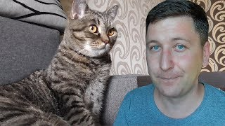 Если ты ветеринар, три типичных случая из жизни