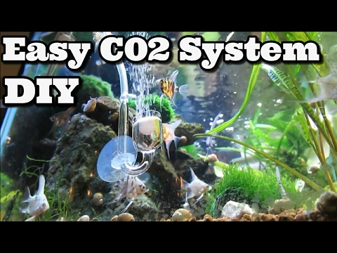 DIY C02 System Fastest and Easiest ! Beginners