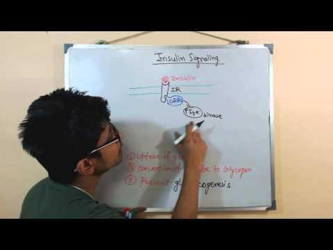 Insulin signaling pathway