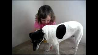 Afv  Do I Submit?  My Daughter Potty Training With A Jack Russell Terrier Named Sam