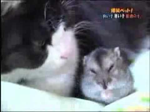 248.vn - Choáng với cảnh mèo và chuột âu yếm nhau