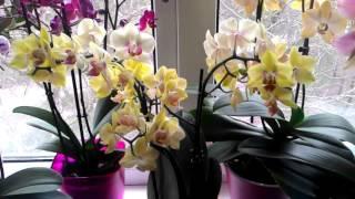 ОРХИДЕИ - КАК ЖЕ Я ВАС ЛЮБЛЮ!!!(Мои любимочки)Цветы моя слабость...а если это орхидеи...тут и слов мало...) Видео для настроения!!!, 2016-03-26T11:04:05.000Z)