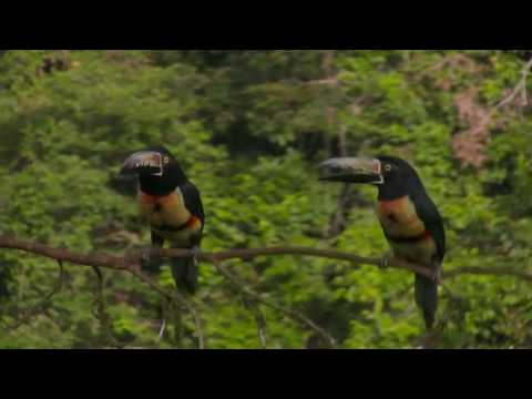 Costa Rica - La Laguna Del Lagarto Lodge
