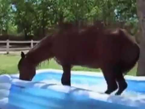 funny moments video - funny horse 2015 thumbnail