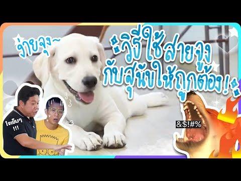 วิธีฝึกใช้สายจูงกับน้องหมาและสัตว์เลี้ยงที่ถูกต้อง !! EP.4  Khonpets