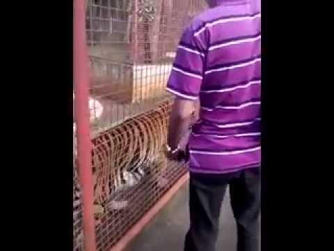 maasin leyte zoo part1