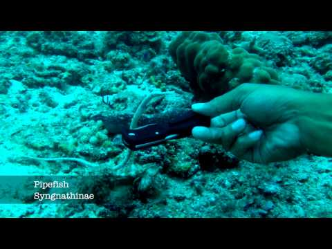 Reef Life of Tioman, iPhone 4s underwater