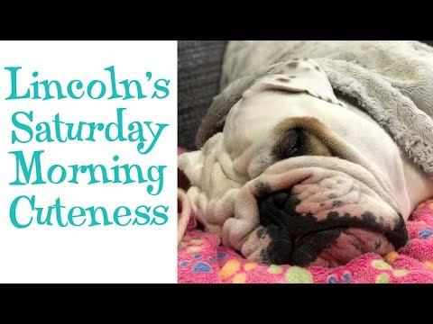 Lincoln's Saturday Morning Cuteness