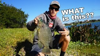 On this episode of TylersReelFishing, I set out with my buddies to ...