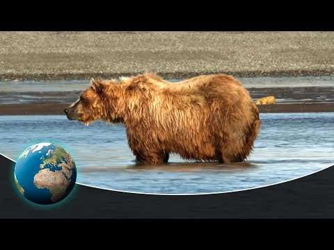 Kermode: The Salmon Fishing Spirit Bear