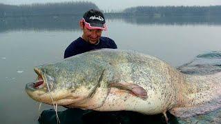 light spinning rod caught 2 50 mts catfish 110 kgs hd by catfishing world