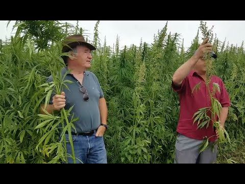 Hemp Growing Methods