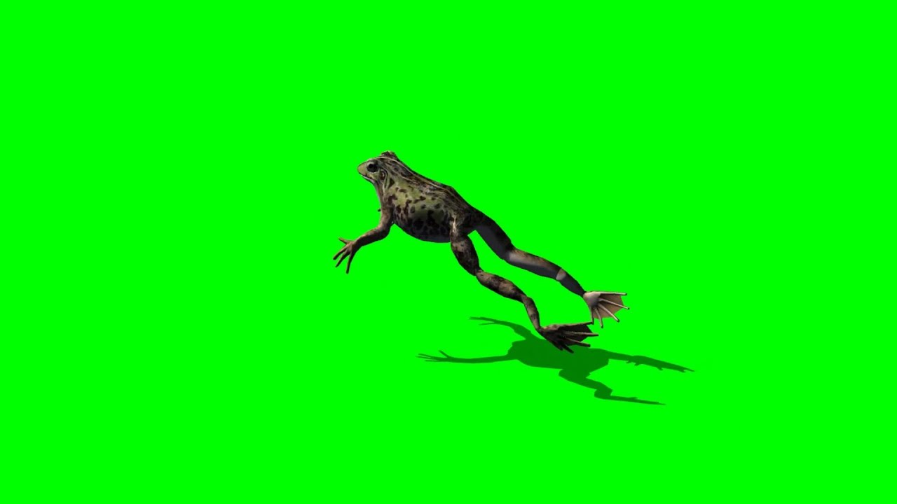 why frogs jump It depends on the species of the frog but most frogs actually don't jump that high compared to other jumpers in the animal kingdom they are better known for being.