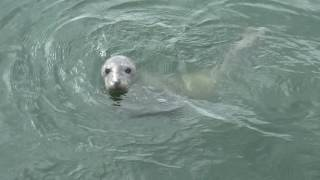 Dutch Wadden Sea (Waddenzee) - UNESCO World Heritage @ We Love Earth