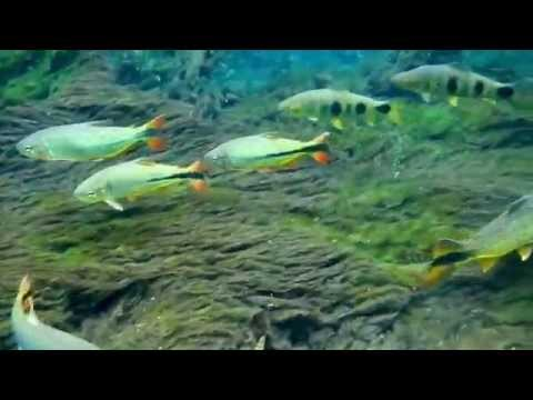 Fish, freshwater fish, nature conservation, Observation for Buoyancy,