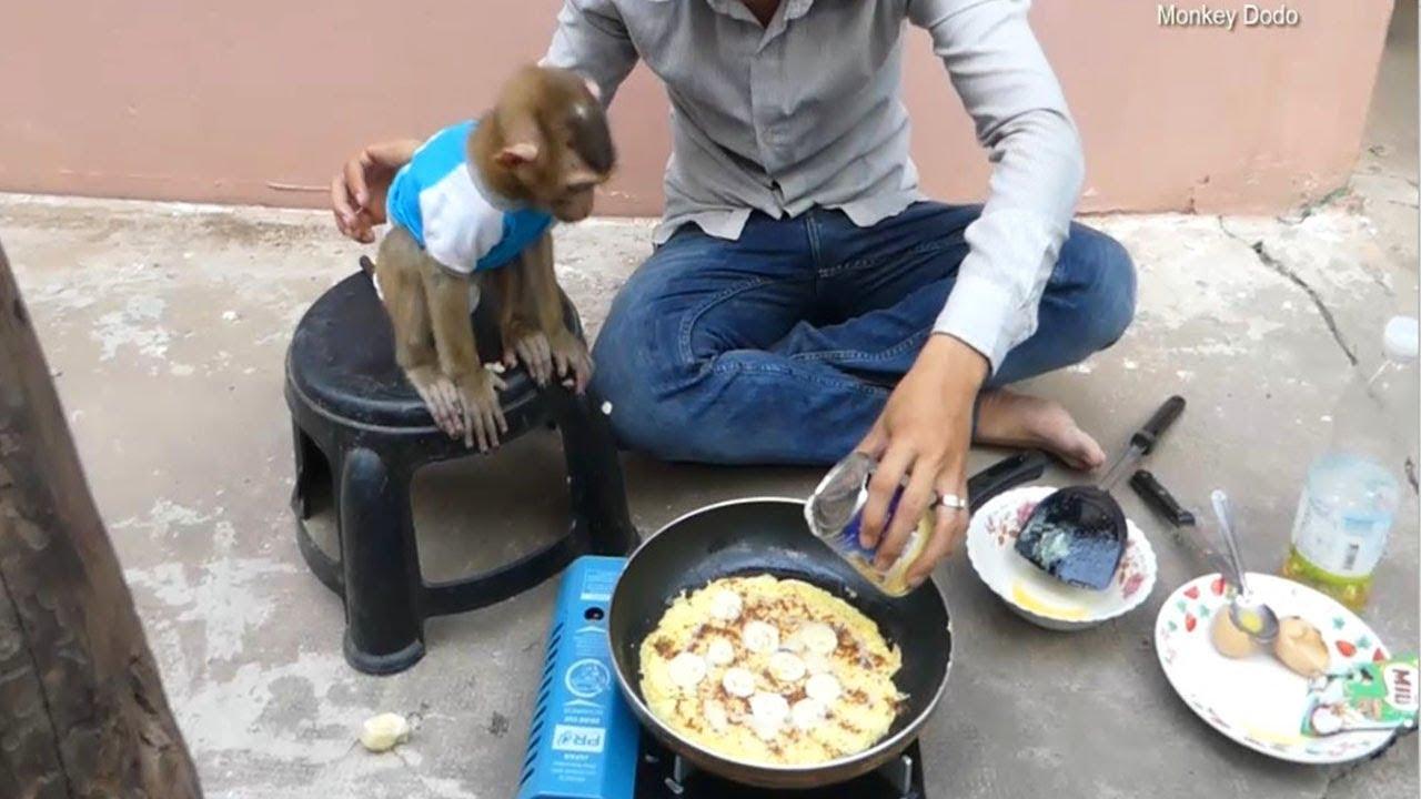 Monkey Baby Dodo, Dad Make PanCake Banana For Dodo