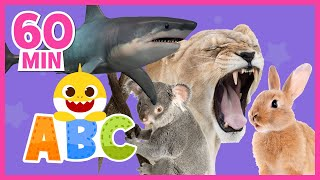 [MIX] Learn ABCs with Baby Shark | Learn Animals | @Baby Shark! Best Shows: Colors, ABCs & Puzzles