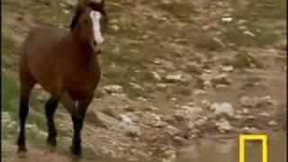 susan boyle wild horses with lyrics