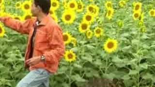 This beautiful sunflower garden is located near Salem...
