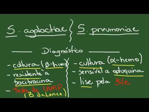 Streptococcus e Enterococcus - Resumo - Microbiologia