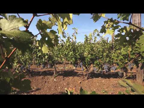 """National video catalogue """"This is Bulgaria"""" - On the Road of Wine"""