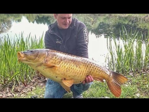 Трофейный Карп 19 килограмм на бойлы. Рыбалка на карпа на озере.