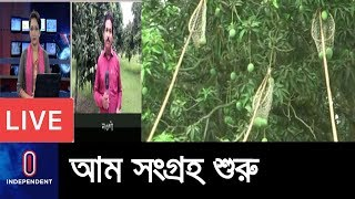 (Live) শুধু নওগাঁতে আম কেনা বেঁচা ৩০০ কোটি টাকার  || Naogaon Mango