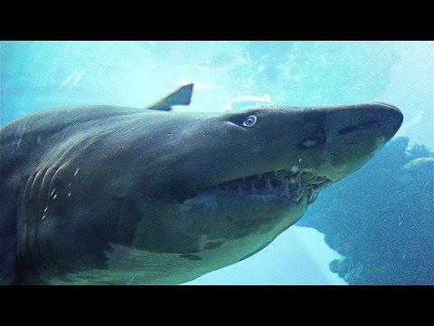 Mallorca - Palma Aquarium Sharks In 4K (Ultra HD)