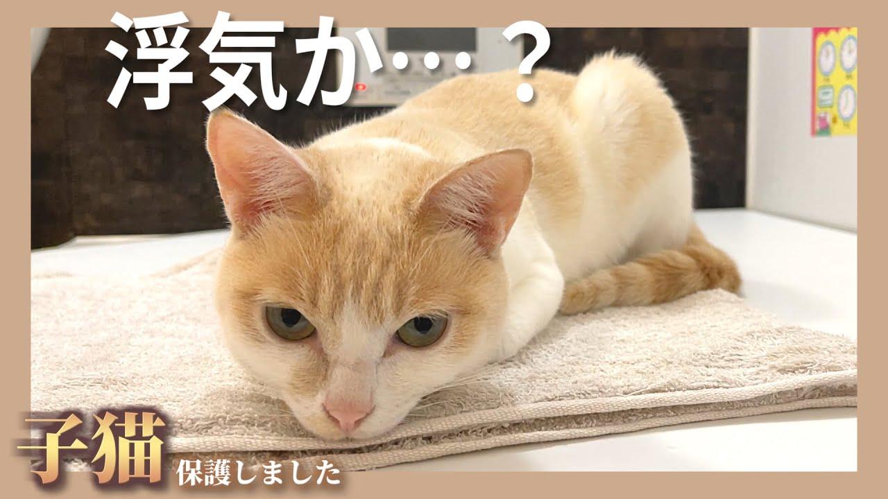 【悲報】いつも通り白猫と混浴していたら急に浮気を疑われ攻撃されました