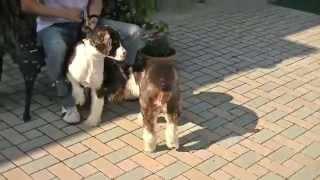 カープ応援犬が、偶然に妹のピラールちゃんと出会った。