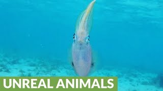 Swimmer is surprised when confronted by unusual creature with human-like face