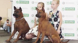 В Харькове прошла Международная выставка собак