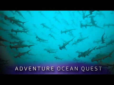 ► Adventure Ocean Quest - Shark Paradise of Polynesia (FULL Documentary)