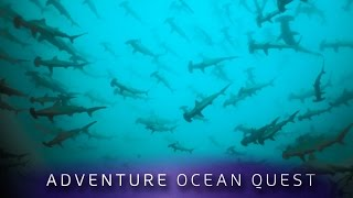 ► Adventure Ocean Quest - Shark Paradies of Polynesia (FULL Documentary)