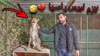 قررت آخذ الفهد من حديقه الحيوان !! ولكن ؟؟