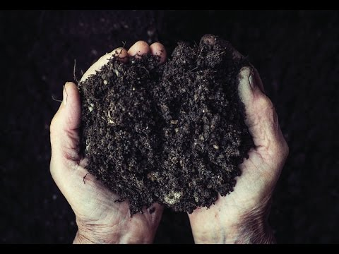 Quick Start Gardening Guide: The Basics of Great Garden Soil