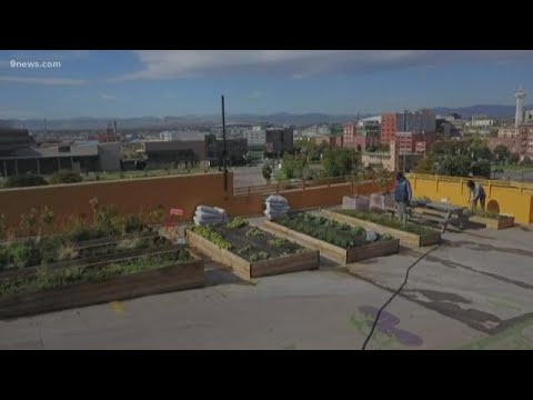 BEARDO - More Roof Gardens could be a thing in Denver