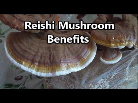 Health Benefits Of Reishi Mushroom