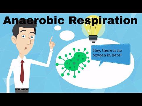 Anaerobic Respiration Fermentation