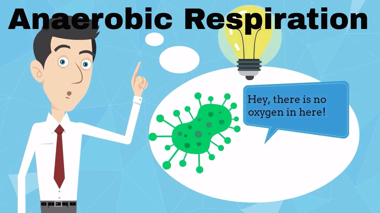 science respiration Science: respiration and breathing 20 respiration.