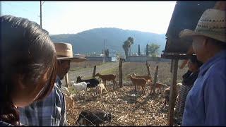 VIDEO OFICIAL GRUPO JUVENTUD 5 EL CHIVO FLACO  production 2015