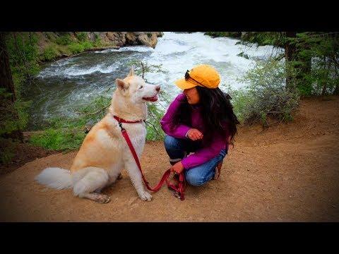 Funniest Pets 😂🐶 Cute Dogs Talking (Full) [Funny Pets]