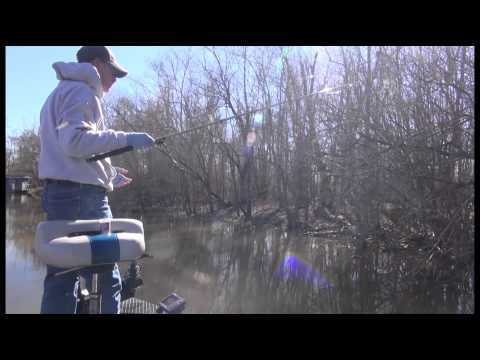 January Sac-a-lait Fishing In The Atchafalaya Swamp