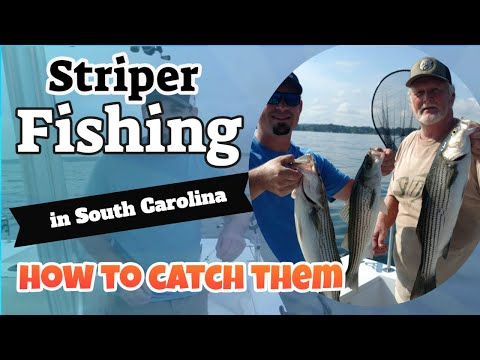 Striper Fishing In South Carolina, How To Catch Stripers On Lake Murray