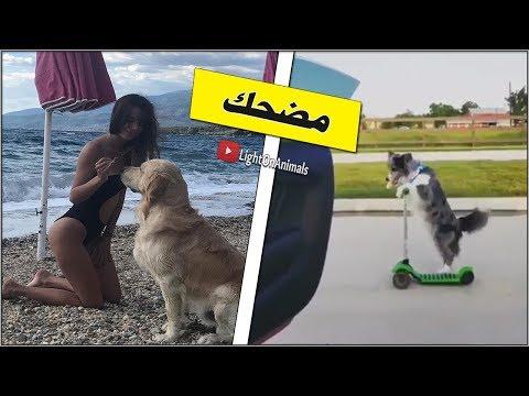 كلاب مضحكة جدا-