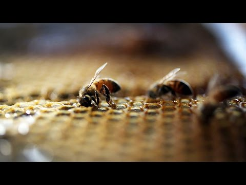 Bees Are Now An Endangered Species