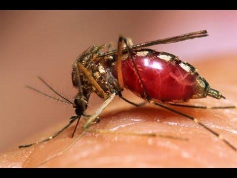 3 remedios caseros para ahuyentar plagas de cucarachas doovi - Como ahuyentar mosquitos ...