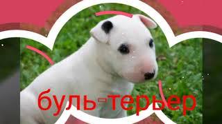 Самые редкие породы собак в Украине