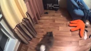 Подгузник на кошке по имени гайка