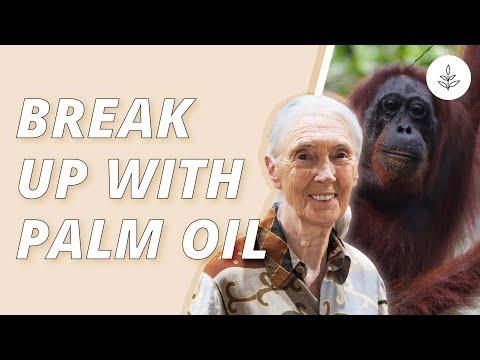 PALM OIL Is DEVASTATING The RAINFOREST | LIVEKINDLY